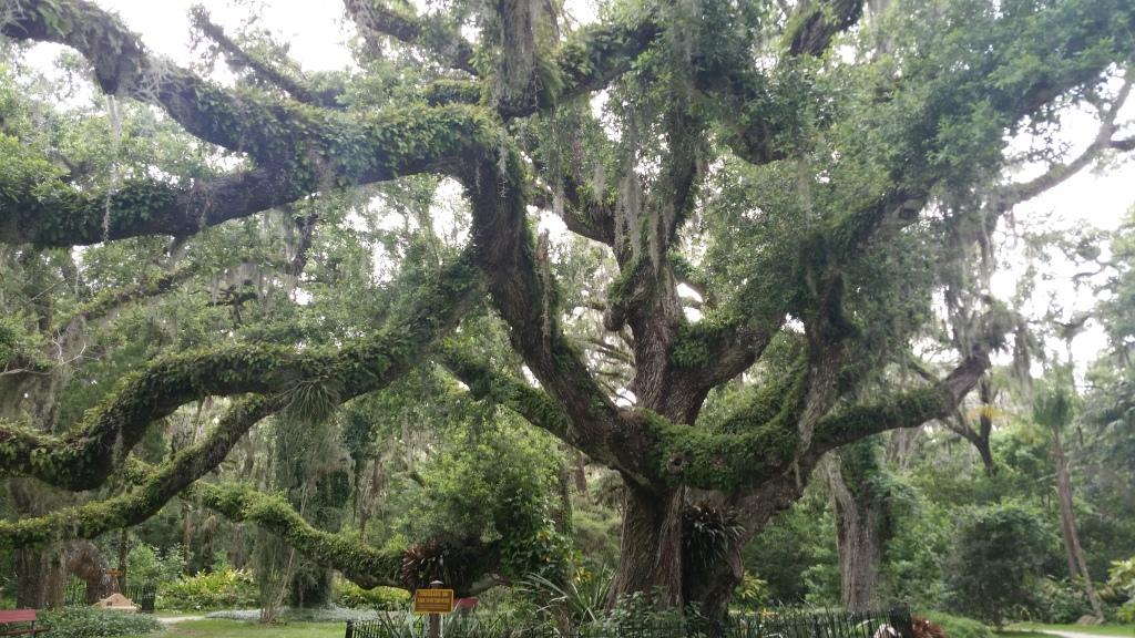 Tree in Savannah, GA