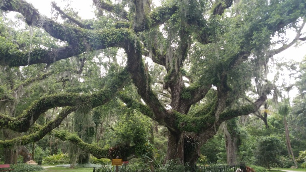 Tree in Savannah, GA